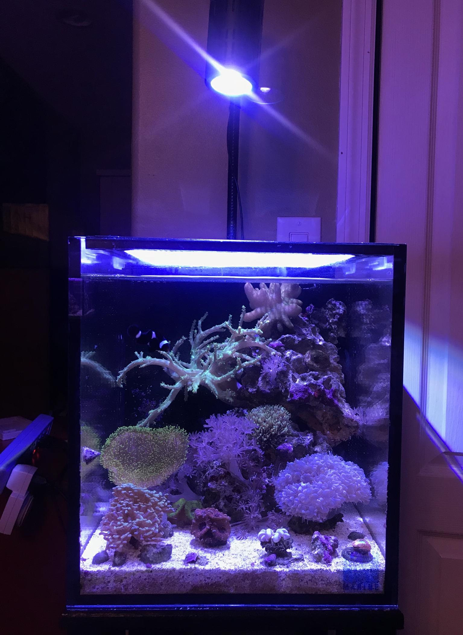 Innovative Marine 10 gallon Nuvo Fusion Nano Aquarium w CustomCaddy