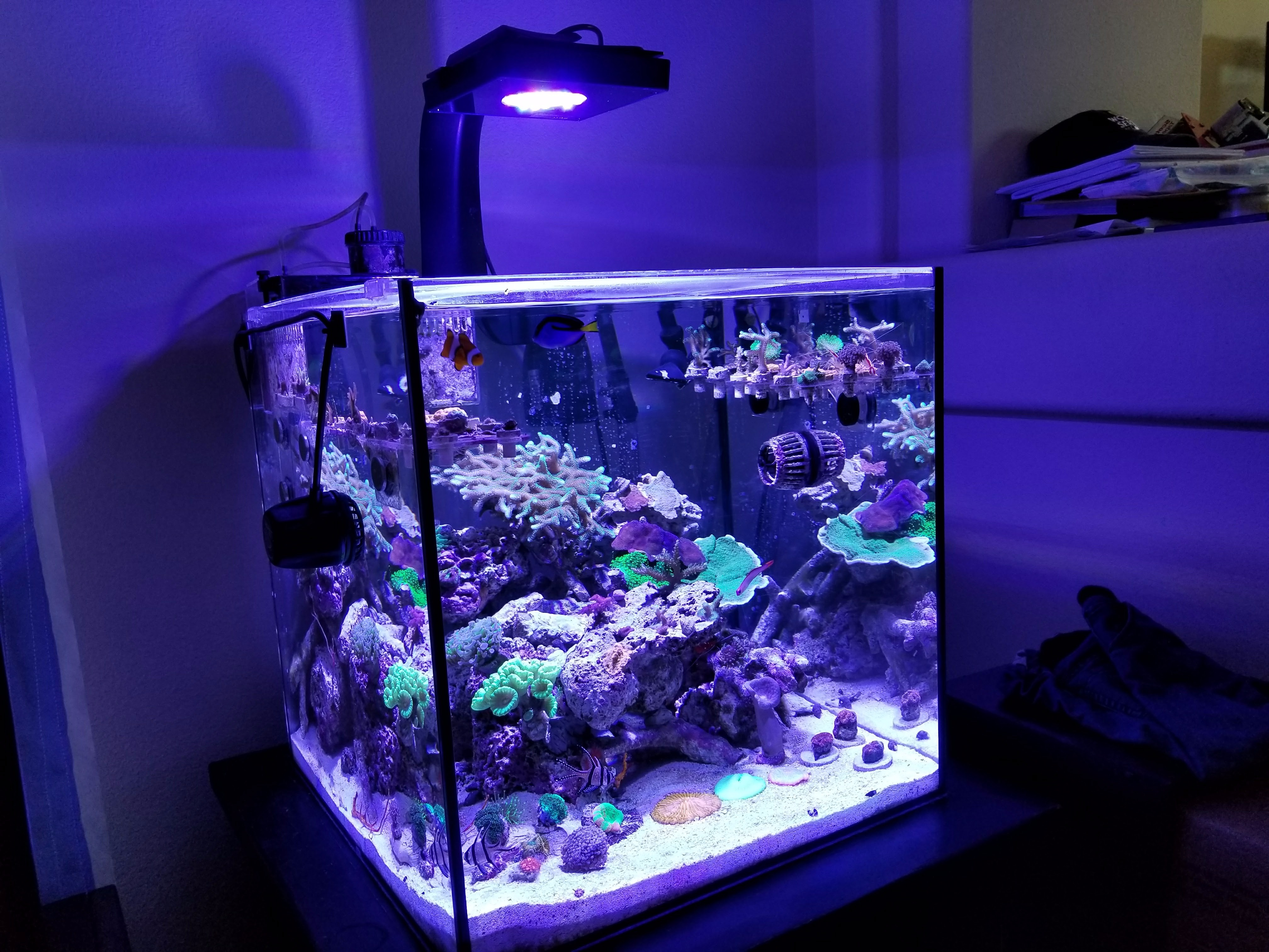 product brackets classicled lights leds light with tank white led and nicrew aquarium blue fish extendable