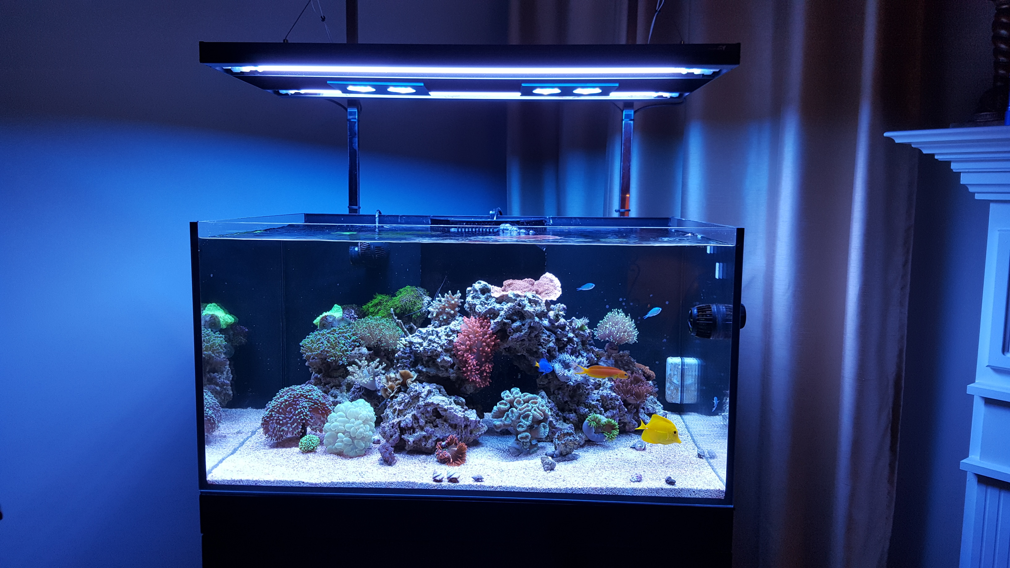 Hybrid T5 Light 36 Inch Fixture with LED Mounting System - Aquatic Life -  Marine Depot