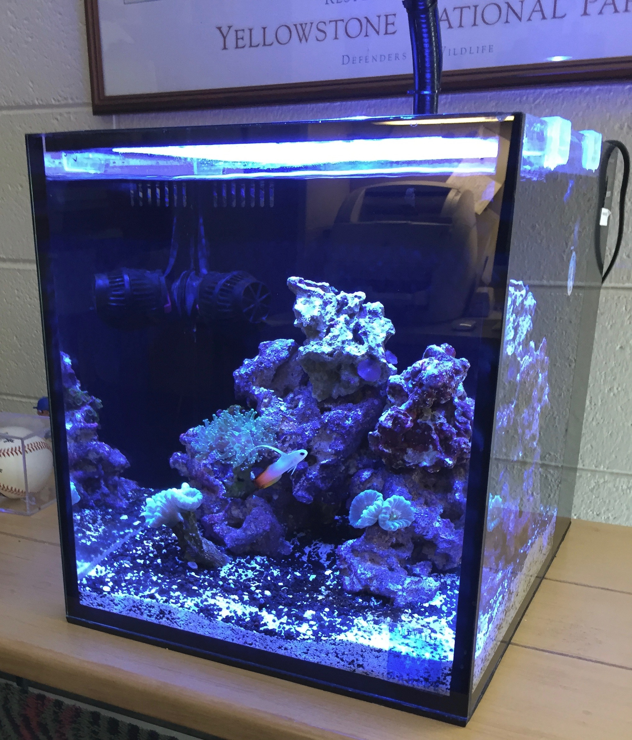 Innovative Marine 10 Gallon NUVO Fusion Nano Aquarium Marine Depot