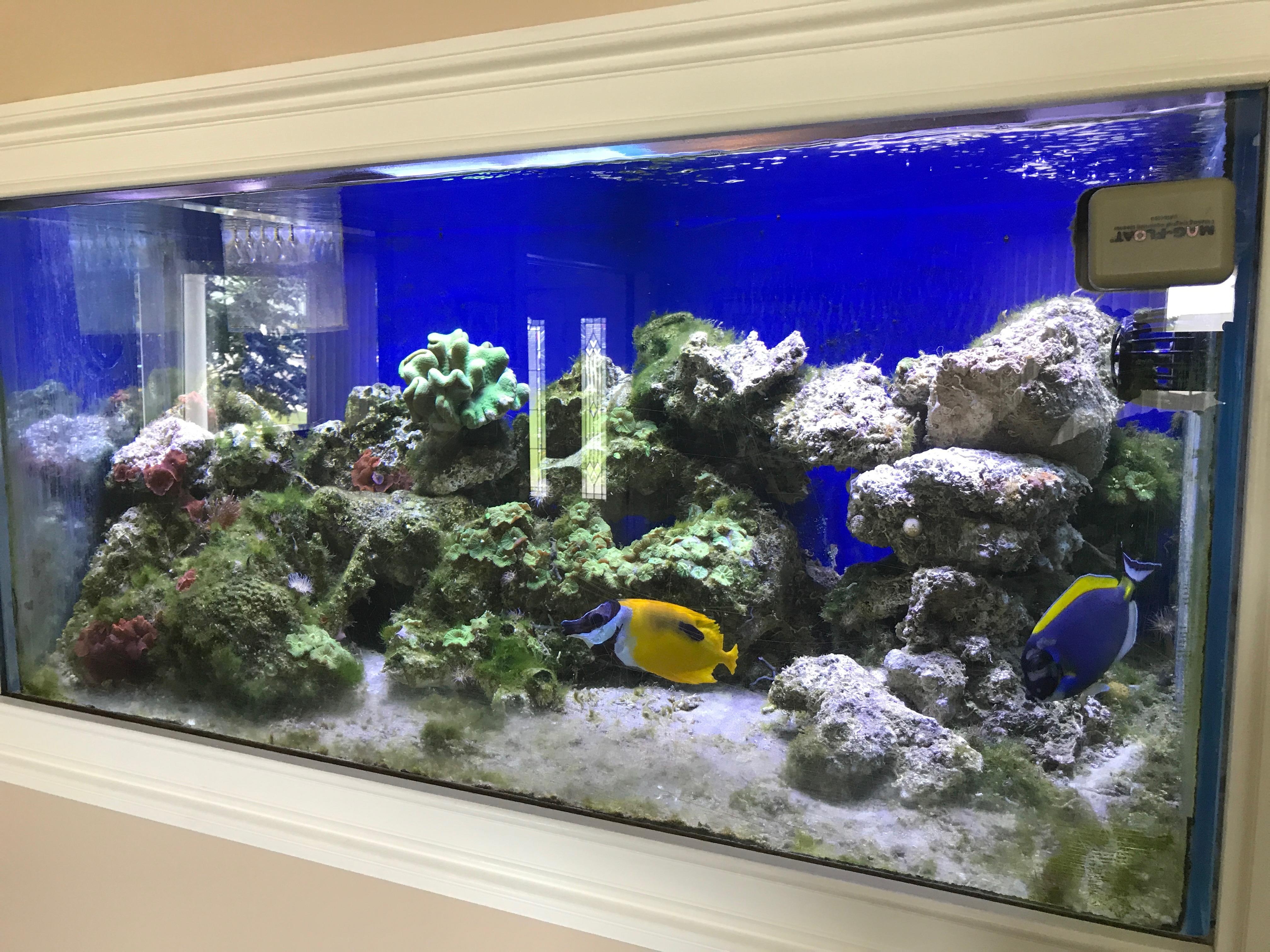 Aquarium Bottom Light Start At Bottom Another View Same